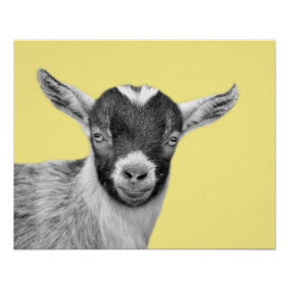 Goat farm animal photo black and white nursery kid poster