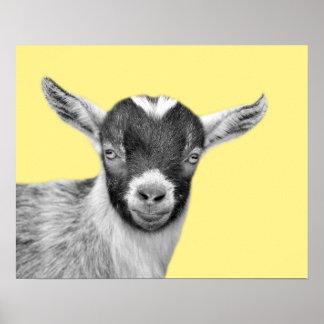 Goat farm animal photo peekaboo black and white poster