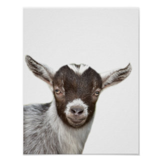 Goat farm animal photo peekaboo kids room poster