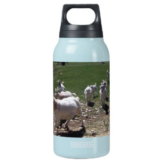 Goat Follow the Leader Insulated Water Bottle
