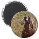 Goat Fridge Magnets