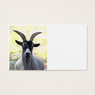 Goat Head Business Card