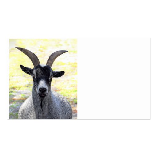 Goat Head Business Cards