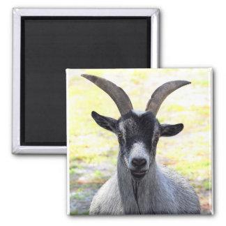 Goat Head Refrigerator Magnets
