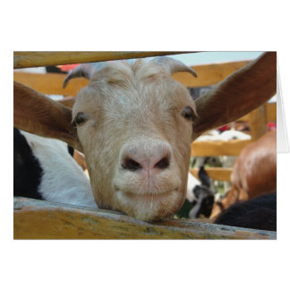 Goat Hello Card