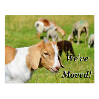 Goat in a pasture we've moved new address postcard