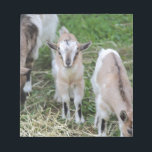 """goat in the farm notepad<br><div class=""""desc"""">goat in the farm</div>"""