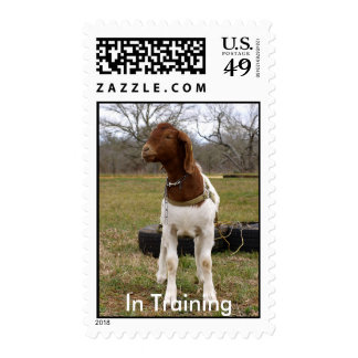 Goat In Training Postage Stamps