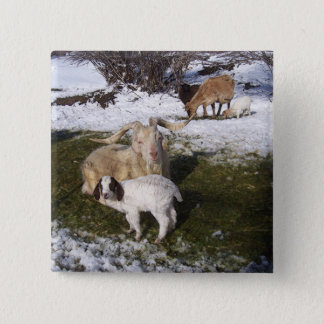 Goat Kid in Snowy Grass Button