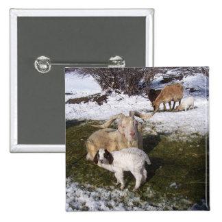 Goat Kid in Snowy Grass Button
