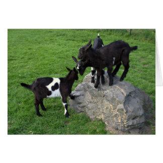 Goat kids cards
