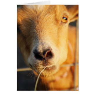 Goat Kisses Greeting Card