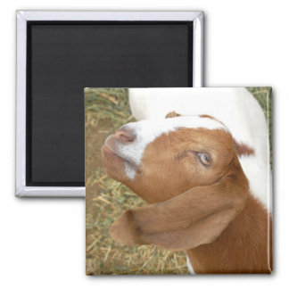 Goat Look 2 Inch Square Magnet