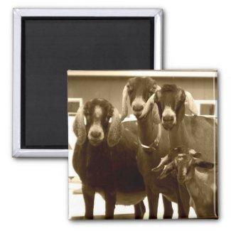 Goat Magnet magnet