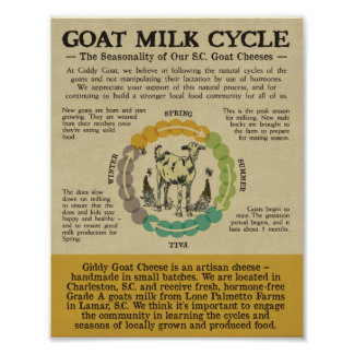 GOAT MILK CYCLE POSTER