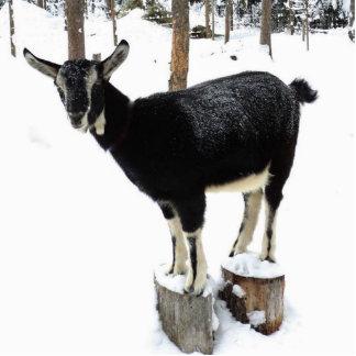 Goat named Flower photo sculpture