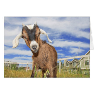 Goat Note Card