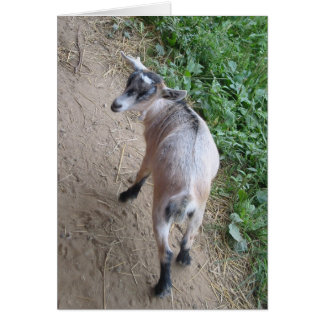 Goat Note Card 2