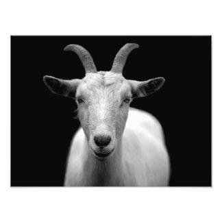 Goat Photo Art