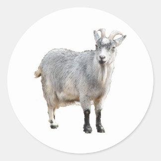 Goat Photograph Design Round Stickers