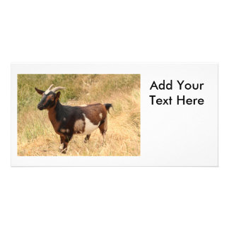 Goat Picture Card