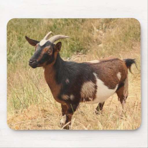 Goat Picture Mousepads