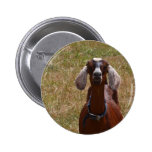 Goat Pinback Buttons