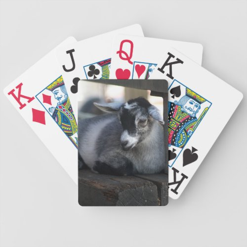 Goat Playing Cards