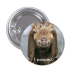 Goat pooping. 1 inch round button