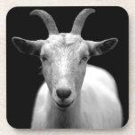 Goat portrait in black and white beverage coaster