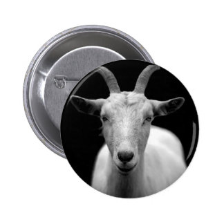 Goat portrait in black and white pin