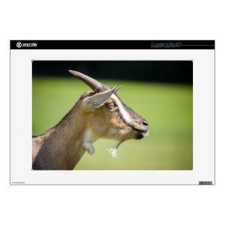 Goat Portrait On A Blurred Green Background Skins For Laptops