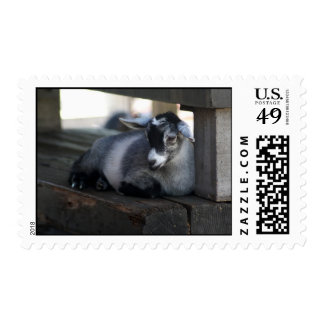Goat Postage Stamps