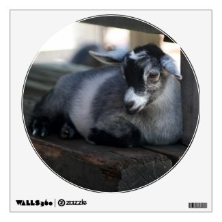 Goat Room Graphics