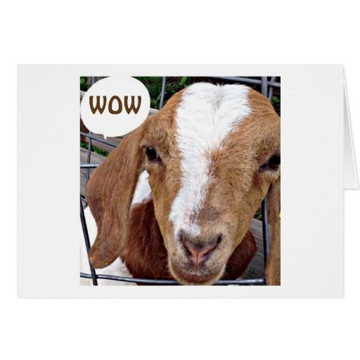 """GOAT SAYS """"WOW LOOK WHAT YOU HAVE DONE"""" CARD   Zazzle"""