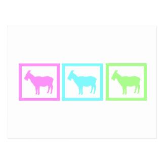 Goat Squares Postcard