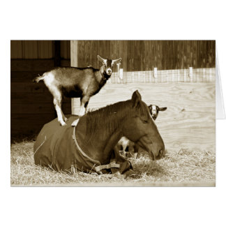 Goat Standing on Patient Horse Card