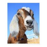 Goat star 1.jpg post cards