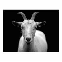 Goat Statuette