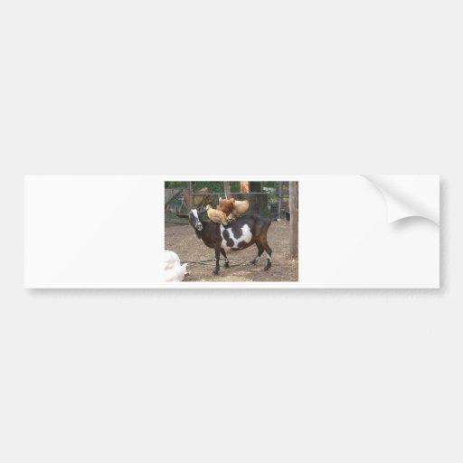 Goat taxi car bumper sticker
