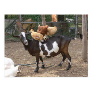 Goat taxi postcard