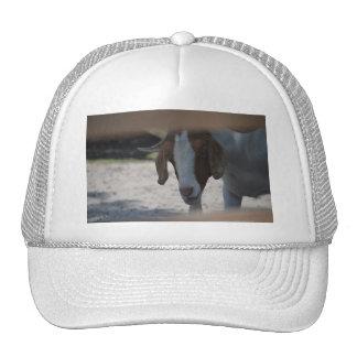 Goat Trucker Hats