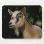 Goat Watching Mouse Pad
