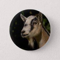 Goat Watching Pinback Button