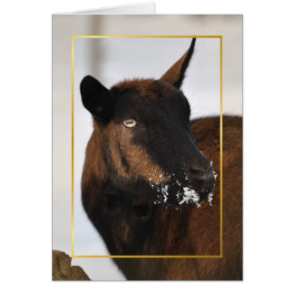 Goat with a snowy nose Xmas card