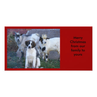 Goats and Family Photo Cards