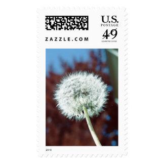 Goat's Beard Postage Stamp