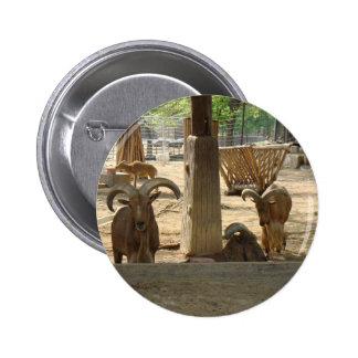 Goats Buttons