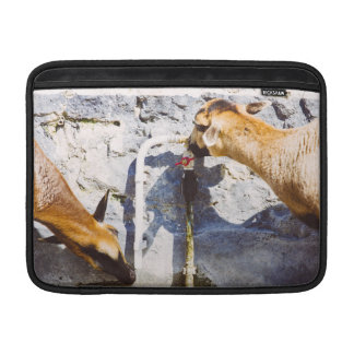 Goats Drinking Water, Animal Photography MacBook Air Sleeves