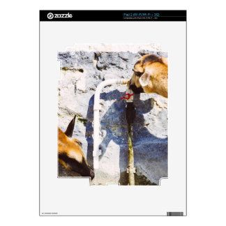 Goats Drinking Water, Animal Photography Decals For The iPad 2